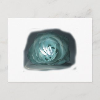 Pale Blue Rose Spolighted Cutout postcard