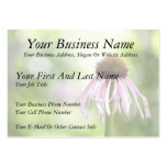 Pale Coneflower - Echinacea Pallida Business Cards