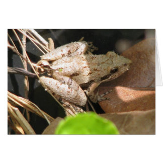 Pale Cricket Frog Card