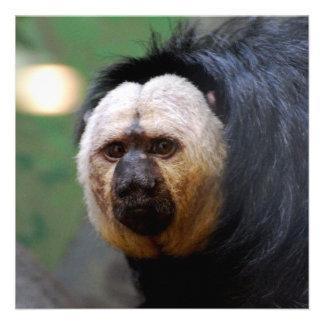 Pale Faced Saki Monkey Personalized Invitations