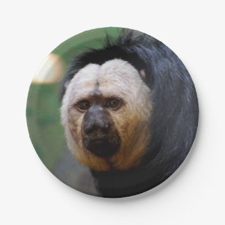 Pale Faced Saki Monkey 7 Inch Paper Plate