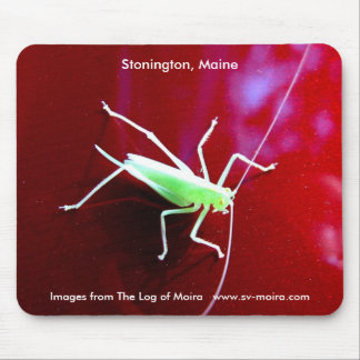 Pale green grasshopper, Stonington, Maine Mouse Pad
