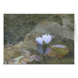 Pale lavenday waterlily card