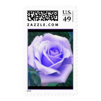 Pale Lavender Rose Postage