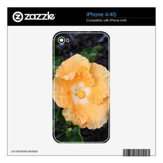 Pale orange hibiscus flower skins for iPhone 4