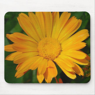 Pale Orange Marigold Flower With Garden Background Mouse Pad