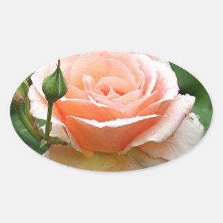 Pale orange rose & raindrops oval sticker