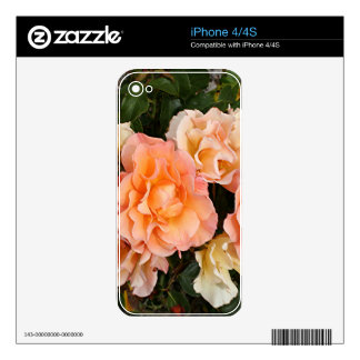 Pale orange roses in bloom in garden decals for the iPhone 4