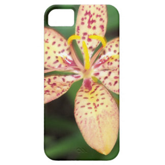 Pale orange spotted Blackberry lily iPhone SE/5/5s Case