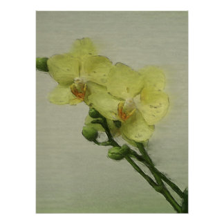 Pale Orchid Poster