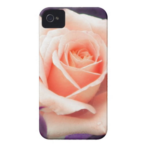 Pale Peach Rose Blackberry Bold Case
