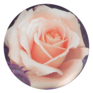 Pale Peach Rose Collector Plate