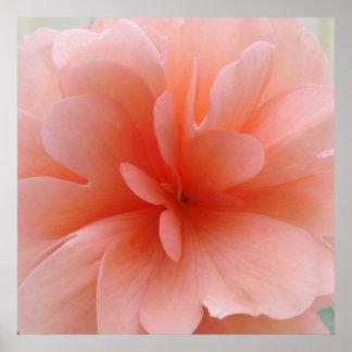 Pale Pink Begonia Print