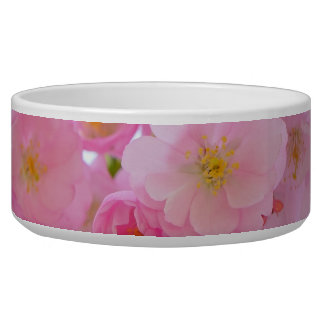 Pale Pink Cherry Blossoms Bowl