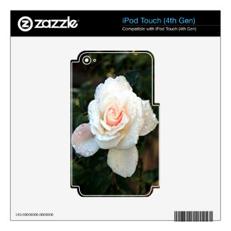 Pale pink & cream rose & raindrops skin for iPod touch 4G