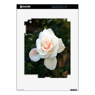 Pale pink & cream rose & raindrops skins for the iPad 2