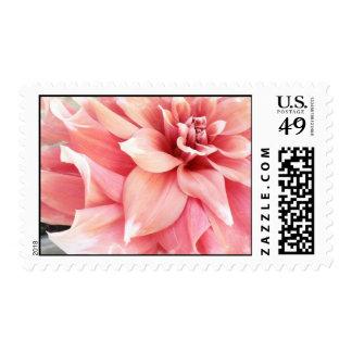 Pale Pink Dahlia Postage Stamp
