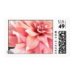 Pale Pink Dahlia Postage Stamp