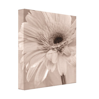 Pale Pink Daisy Wrapped Canvas Print