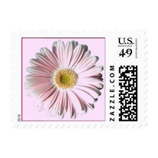 Pale Pink Gerber Daisy Stamp
