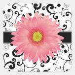 Pale Pink Gerbera Daisy Black Scroll Design Seal Square Sticker