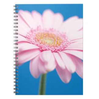 Pale Pink Gerbera Daisy Notebook