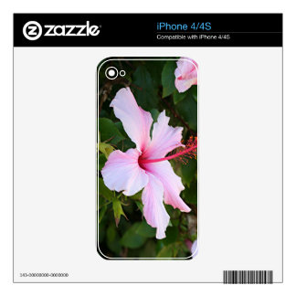 Pale pink hibiscus flower in bloom skin for the iPhone 4