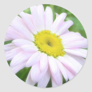 Pale Pink Painted Daisy Classic Round Sticker