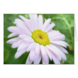 Pale Pink Painted Daisy Greeting Card