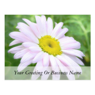 Pale Pink Painted Daisy Postcard
