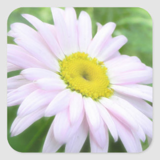 Pale Pink Painted Daisy Square Sticker