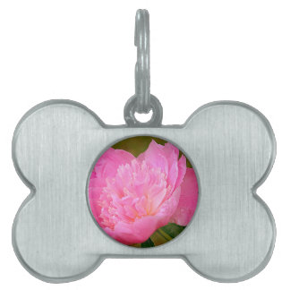 Pale Pink Peony Pet Tag