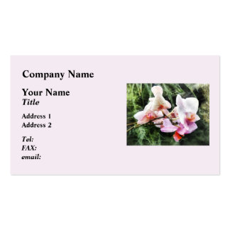 Pale Pink Phalaenopsis Orchids Business Card Template