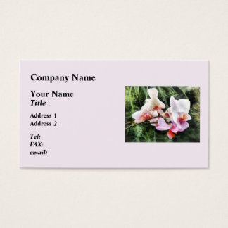 Pale Pink Phalaenopsis Orchids Business Card