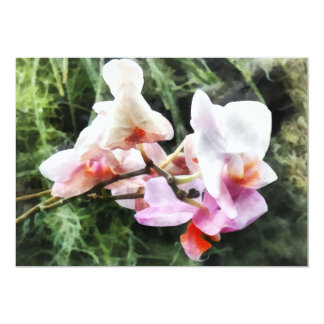 Pale Pink Phalaenopsis Orchids Card