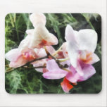 Pale Pink Phalaenopsis Orchids Mouse Pad