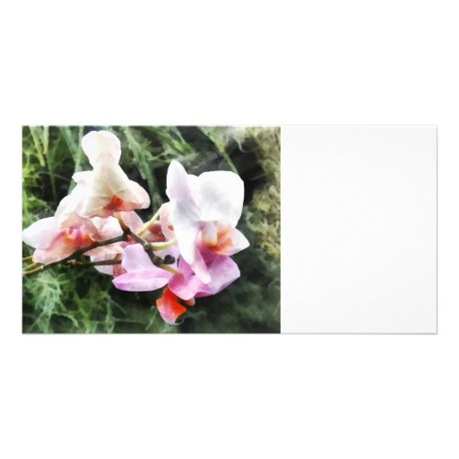 Pale Pink Phalaenopsis Orchids Customized Photo Card