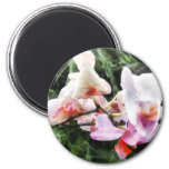 Pale Pink Phalaenopsis Orchids Refrigerator Magnet