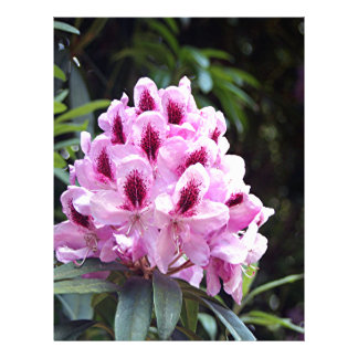 Pale pink rhododendron flower letterhead