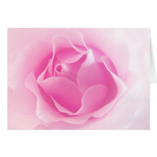 Pale Pink Rose Card ~ with poem
