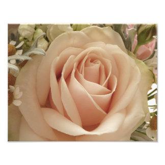 Pale pink rose photo print