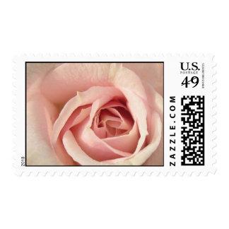 Pale Pink Rose Postage Stamps