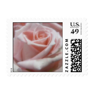 Pale Pink Rose small Postage Stamp