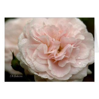 Pale pink rose with raindrops card