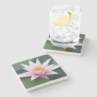 Pale Pink Single Waterlily Coaster