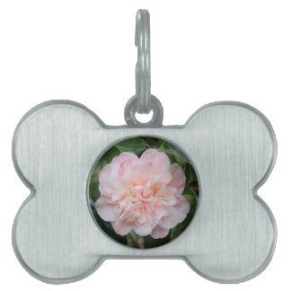 Pale pink striped camellia pet tag