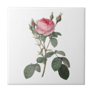 Pale pink vintage roses painting tile