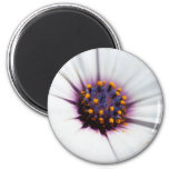 Pale Purple Daisy 2 Inch Round Magnet