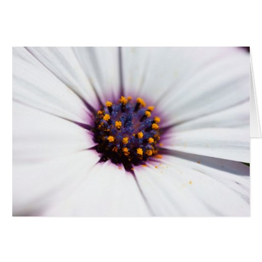 Pale Purple Daisy Greeting Card