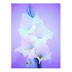 Pale Purple Flowers Post Card